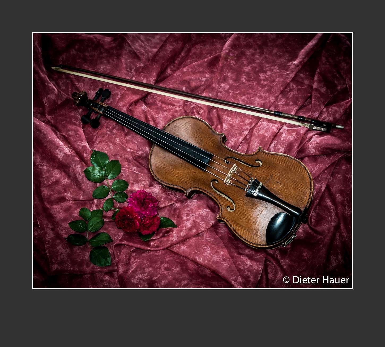 Violine & Rosen